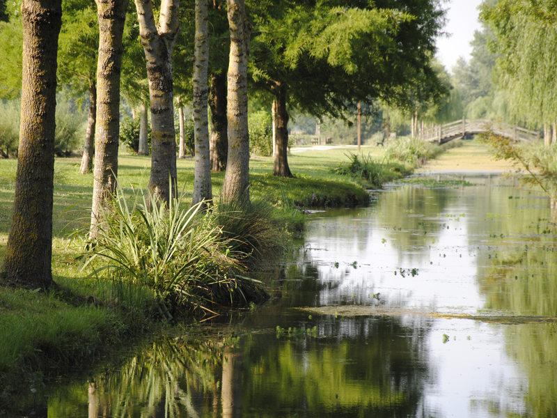 Vue du lac entouré darbres