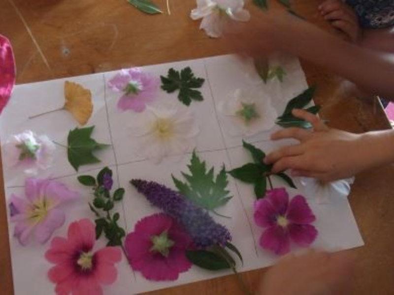 Plantes posées sur papier