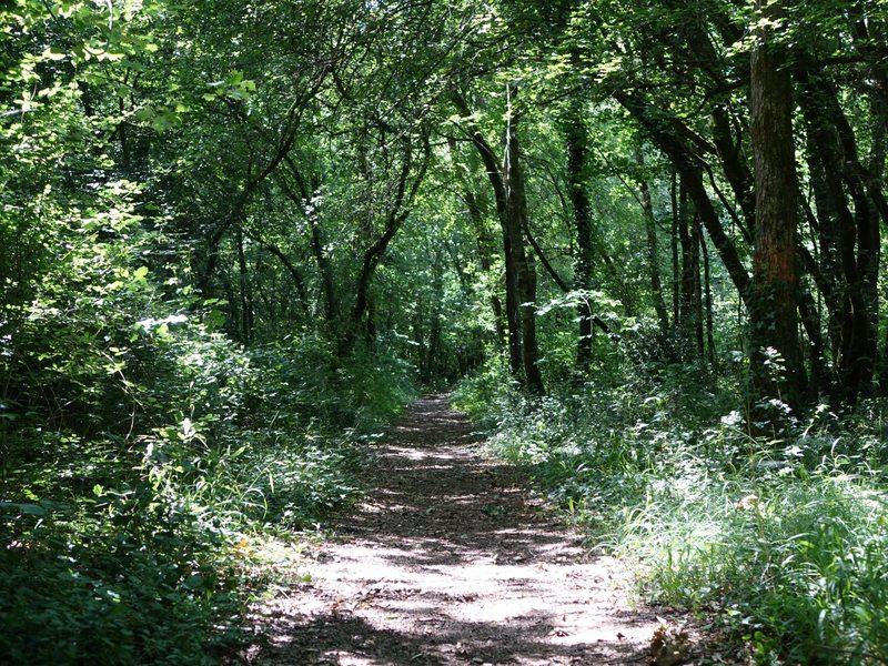 Forêt de Benon