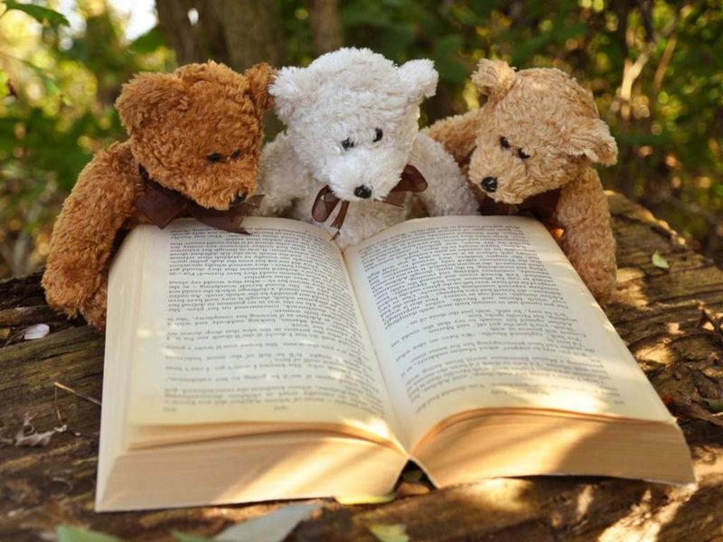 jouet-ours-livre-ouvert-histoire