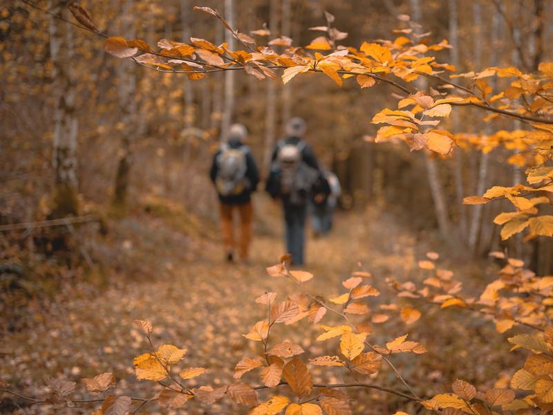 Marcheurs dans les bois