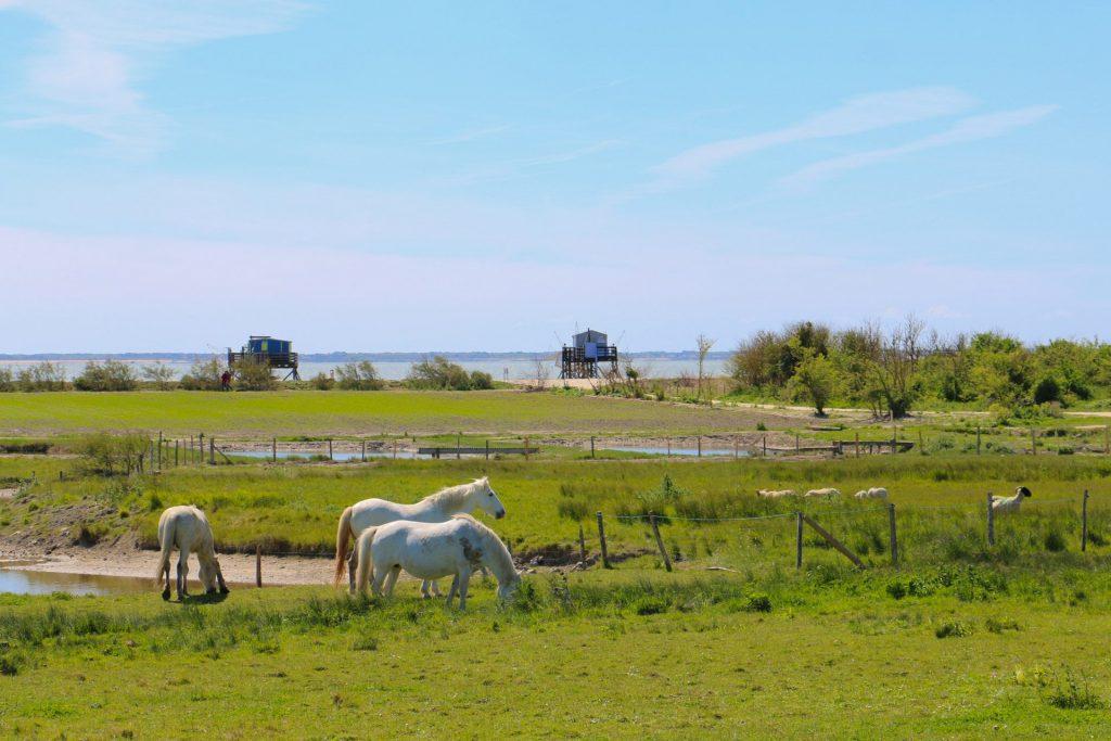 rochefort-ocean-ile-madame-naturemarika-domenici